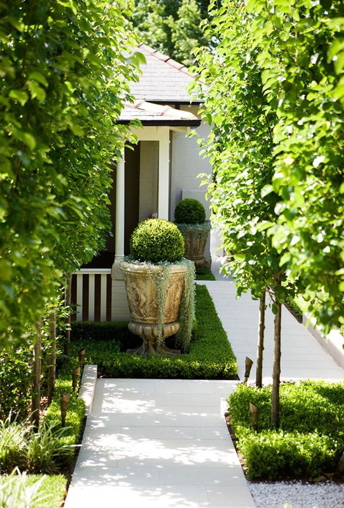 "Straight trunks of [peached pair](https://www.homestolove.com.au/a-beautifully-restrained-city-oasis-2696 |target=""_blank"") that are emphasised through an expanse of white sandstone paving provide a simplistic and welcoming front yard. *Photography: Jason Busch*"