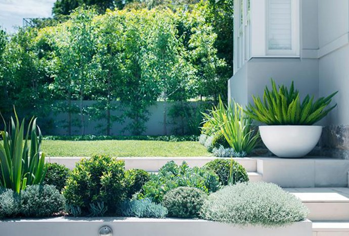 """Level areas of lawn fringed with textured, [layered plantings](https://www.homestolove.com.au/sloping-coastal-garden-by-secret-gardens-5605