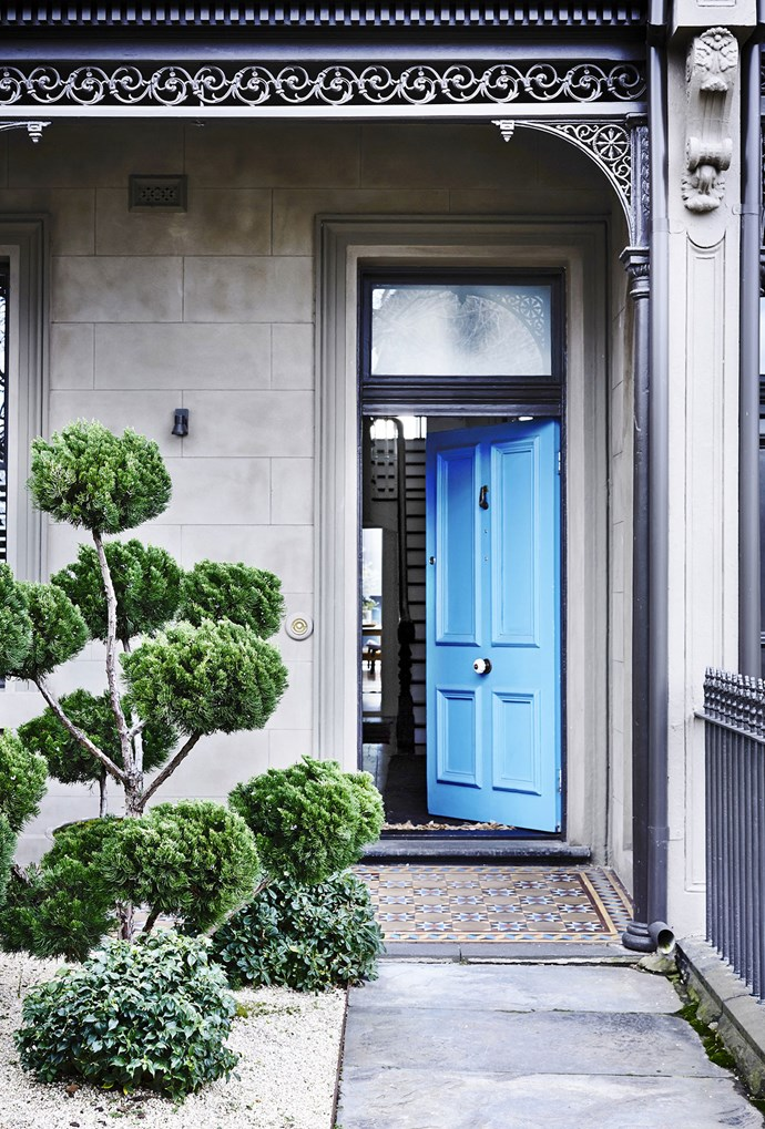 """A bright blue door and elegantly sculpted Chinese juniper hints at the design surprises inside this [Victorian terrace](https://www.homestolove.com.au/gallery-annick-and-stephens-chic-terrace-extension-2327