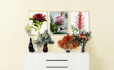 How to grow Australian native flowers