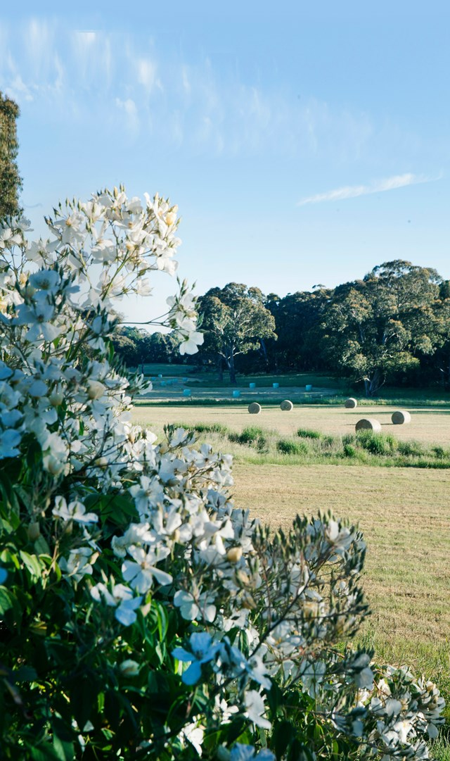 "White rambling roses (Rosa bunonii) signal the spot where the formal garden meets rolling paddocks at this [rural property in central Victoria](https://www.homestolove.com.au/a-rural-property-in-central-victoria-6355|target=""_blank""). *Photo: Simon Griffiths*"