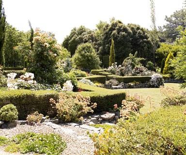 5 flowering hedge plants for Australian gardens