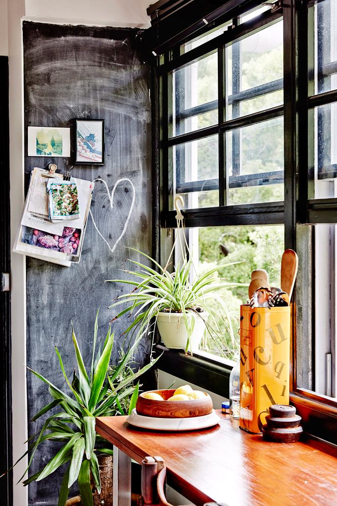 Spider plant (on windowsill).