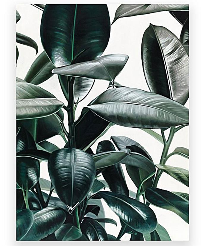 "Rubber Plant Canvas Art, $170, at [Zanui](https://www.zanui.com.au/Rubber-Plant-Canvas-Art-144504.html|target=""_blank""|rel=""nofollow"")."