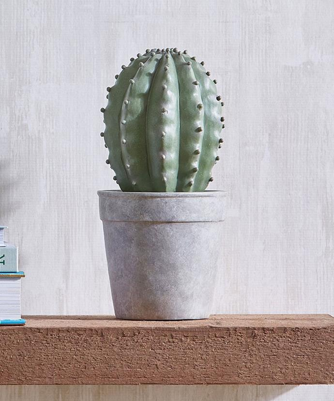 """Cactus Sculpture, $40, at [Bed Bath 'N' Table](https://rstyle.me/n/czbagdvs36
