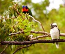 How to attract native birds to your garden