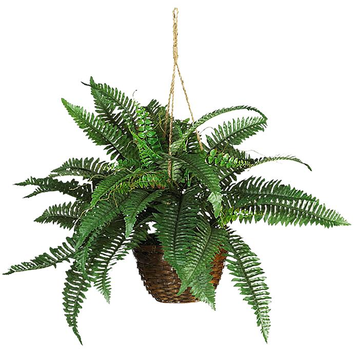 **Maidenhair and Boston ferns:** hung up high in their macramé hangers.