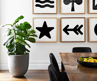 How to take care of your fiddle leaf fig