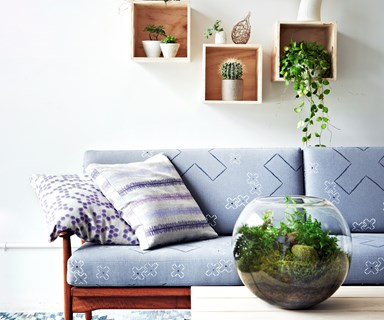 The best paint colours to complement indoor plants