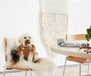 The do's and don'ts of buying pet accessories