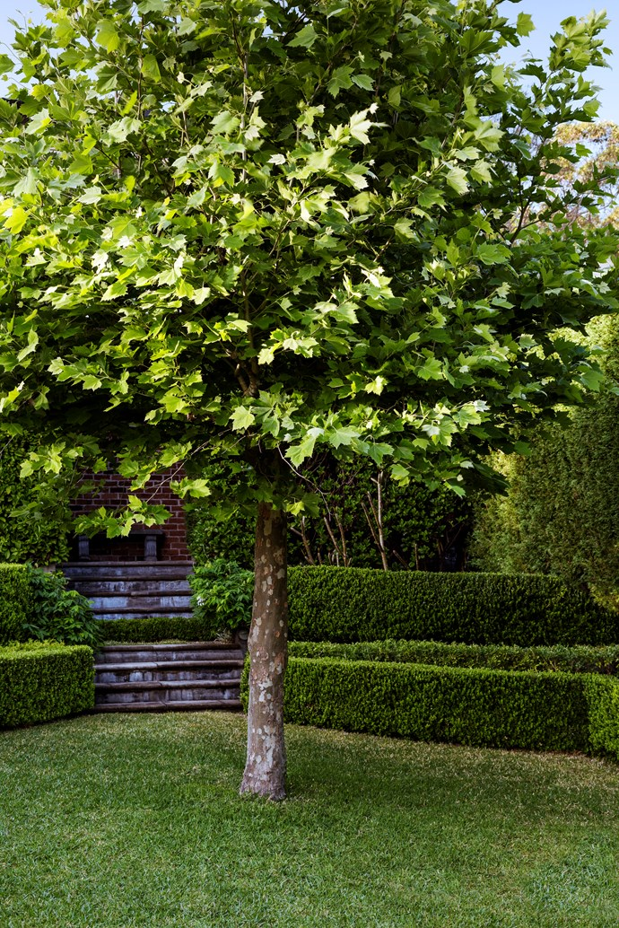 Layers of hedging flank the steps and frame the garden.