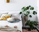The best indoor plants to suit your style