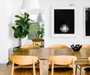 Large leafy indoor plants that will bring your home to life