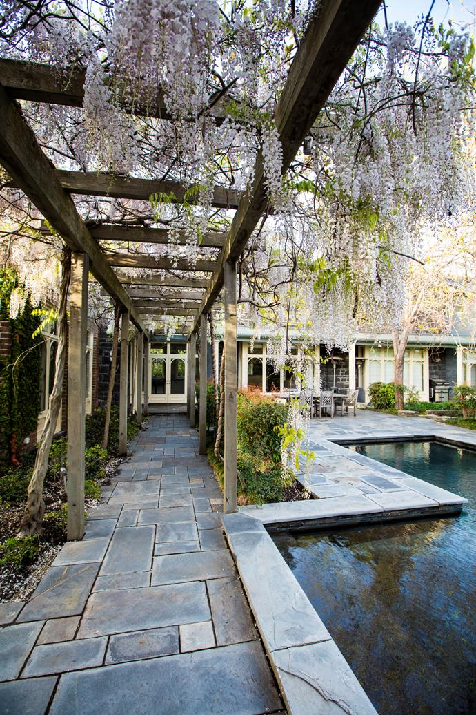 "The wisteria walk was designed to link the front and back gardens. ""It frames and balances the garden and forms a beautiful backdrop for the pool area,"" says Scott. It's white Japanese wisteria (*Wisteria floribunda 'Alba'*) which has longer tassels than Chinese wisteria."
