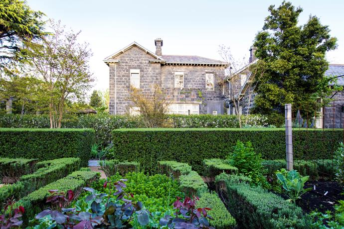 Bronwyn's vegetable garden is always brimming with seasonal produce.T he garden beds are framed with a combination of buxus, rosemary and privet. The clipped perimeter hedge is European privet