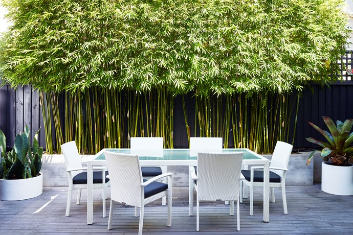 Bamboo is a popular plant for screening and privacy. *Photo: Anson Smart*