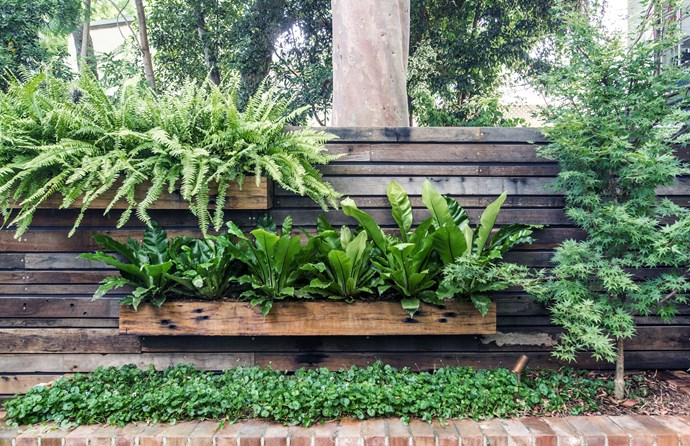 A vertical garden is the perfect way to utilise every inch of space in a compact garden. *Photo: Jessica Harris*