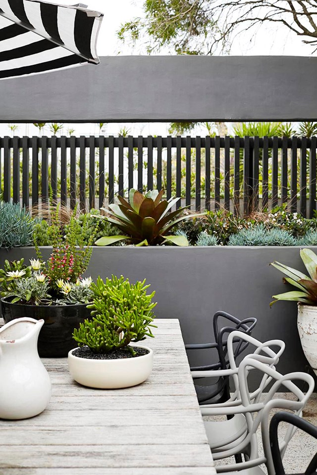 A large Alcantarea bromeliad is the perfect feature plant for this rooftop garden in Bondi.