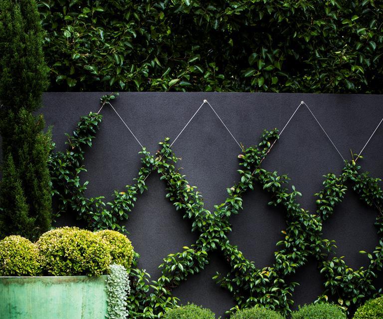 Garden Fencing Ideas And Colours Bbc Gardeners