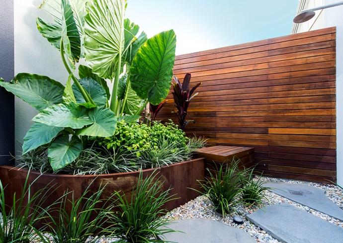 The raised garden bed, made from corten steel, contains a lively mix of foliage textures and colours with (from front) Ophiopogon intermedians 'Stripey White', Nandina domestica 'Nana', Alocasia brisbanesis (Elephant ears) and burgundy Cordyline fruticosa (Ti plant).  *Photo: Peta North*