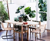How to take care of your Monstera deliciosa