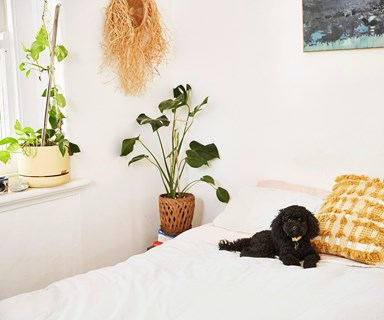 The best indoor plants for your bedroom