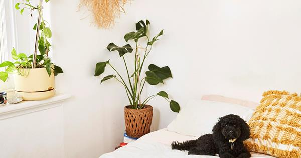 The Best Indoor Plants For Your Bedroom Homes To Love