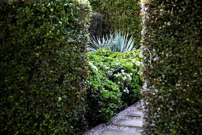 Clipped magenta lilly pilly hedges contain a courtyard garden of Dracaena draco and crassula.