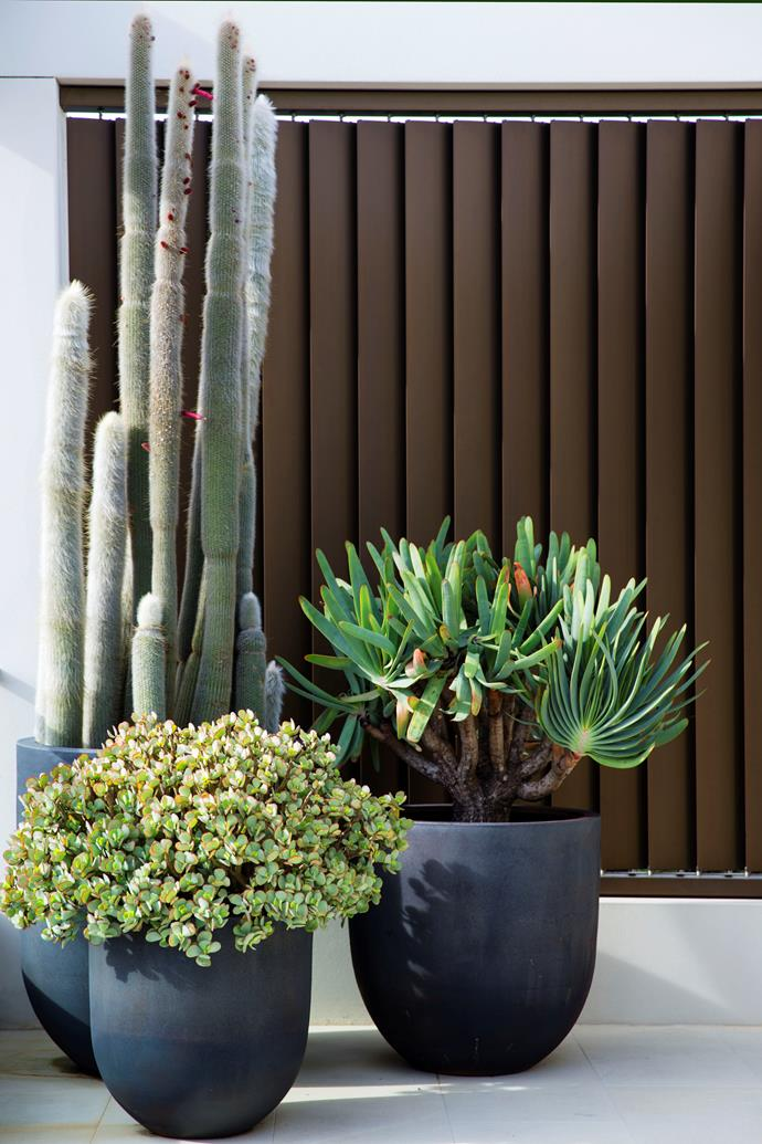 A collection of varied succulents in handmade charcoal planters line the terrace.