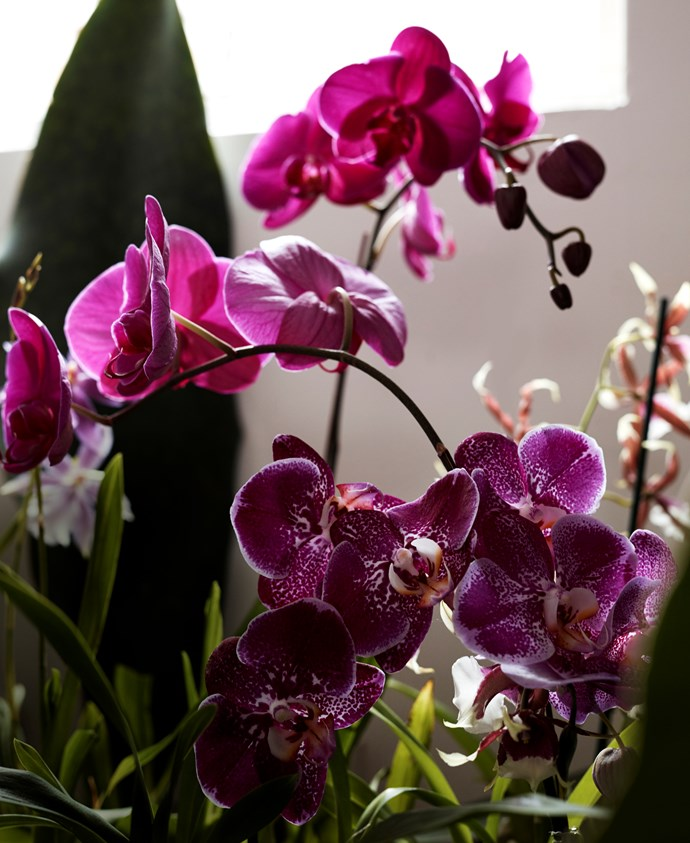 Orchids are often associated with love, and are coveted for their beautiful, vivid colours.