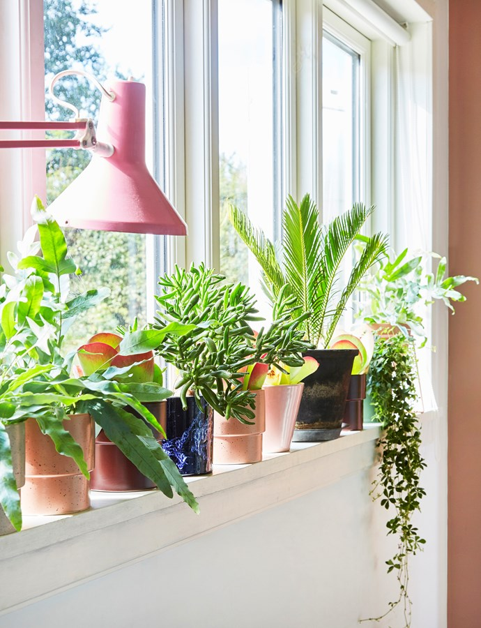 All of Cecilie's plant pots were found at flea markets. Succulents, ferns and creepers are favourites.