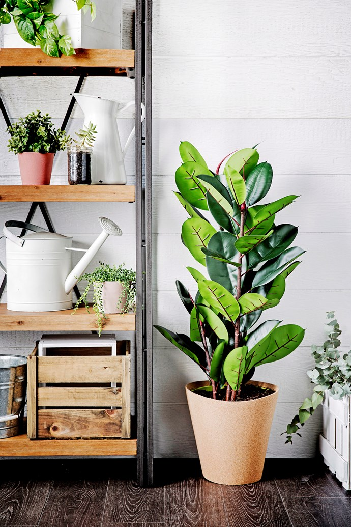 Keep your indoor plants green and glossy by regularly cleaning them.
