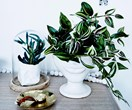 Why you should clean your indoor plants regularly