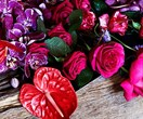 The 'It' flowers flooding our Instagram feeds