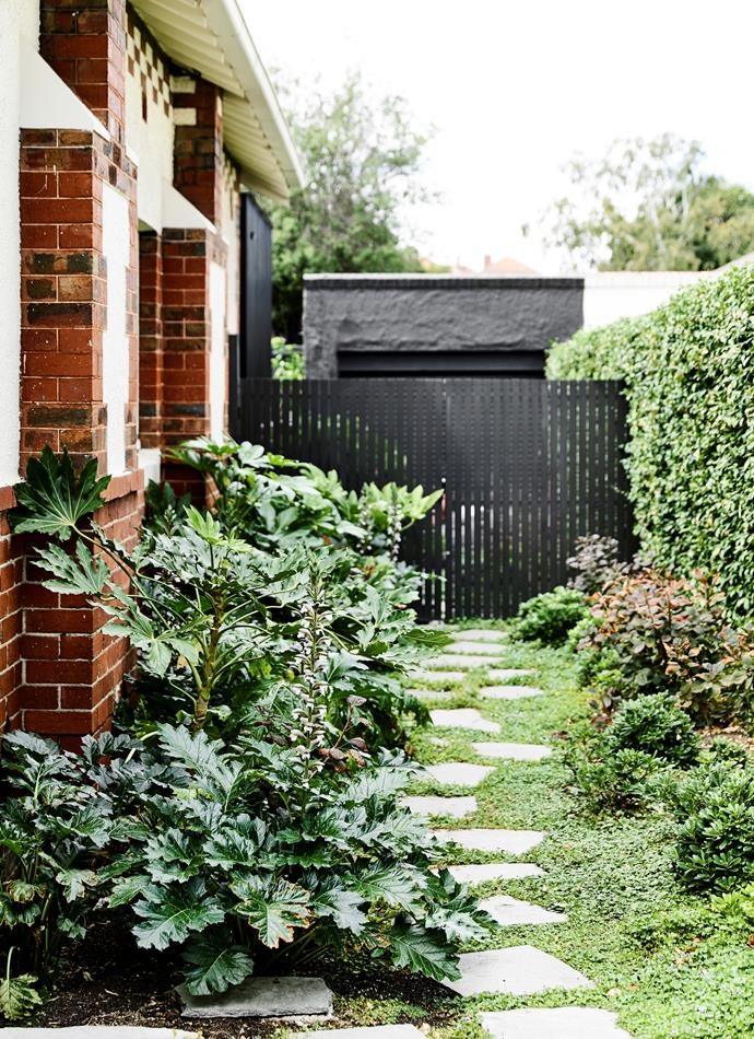 "[Fast-growing evergreen plants](https://www.homestolove.com.au/five-fast-growing-screening-plants-for-privacy-5164|target=""_blank"") such as Dichondra repens and Fatsia japonica help a garden look established quickly."