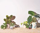 5 reasons why your indoor plants might be dying