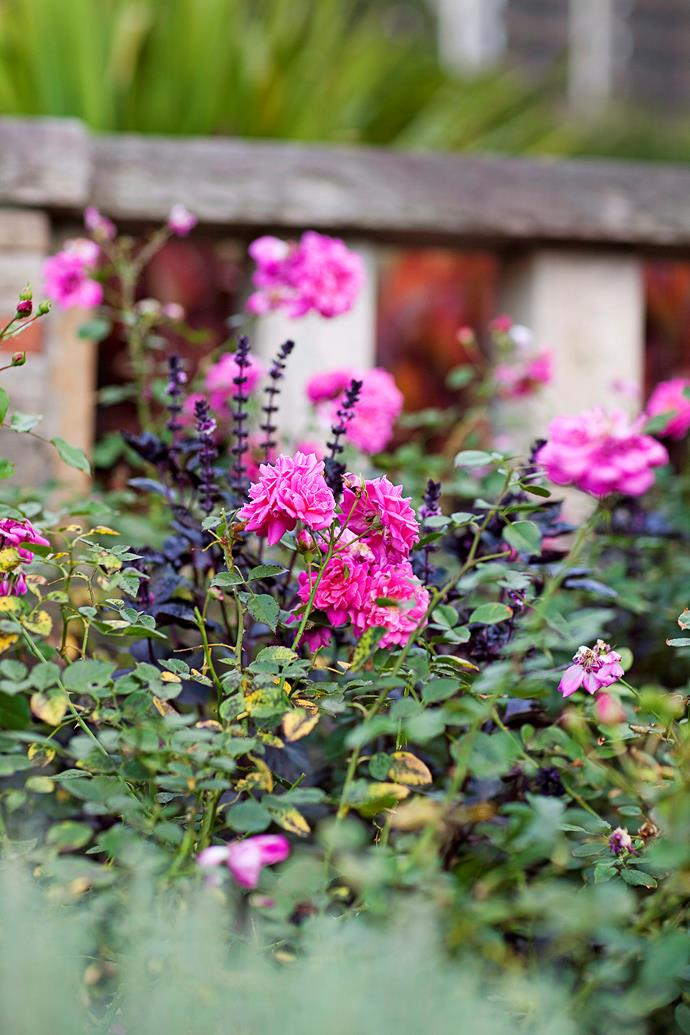 Much of the seasonal rose activity, especially pruning and planting, should take place in winter. Photo: Chris Warnes / bauersyndication.com.au