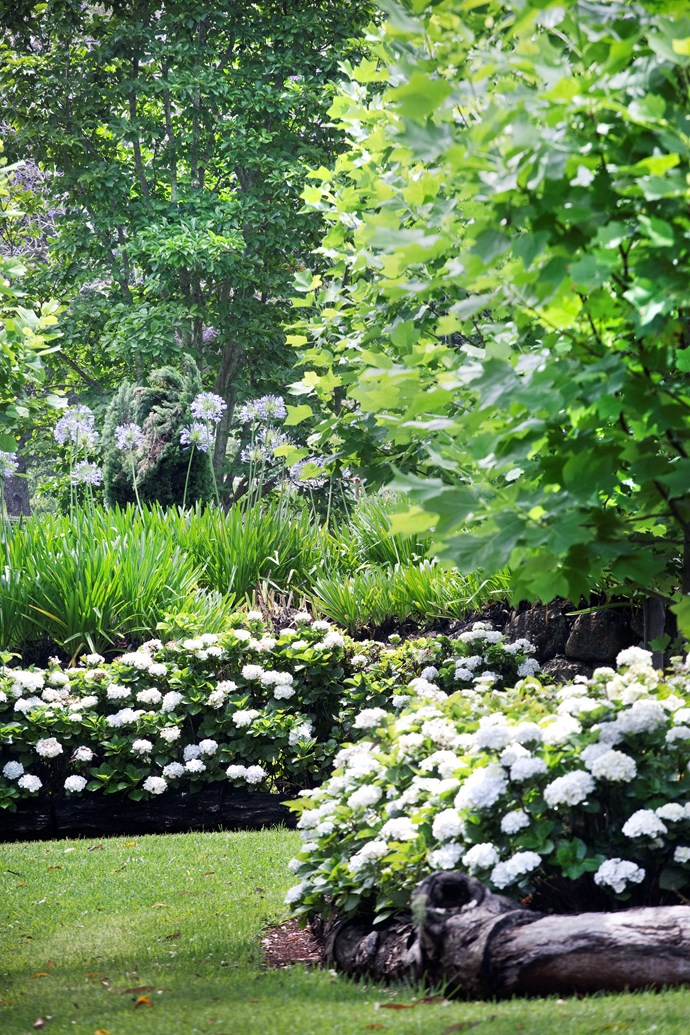 Azaleas and agapanthus add to the lush layers.