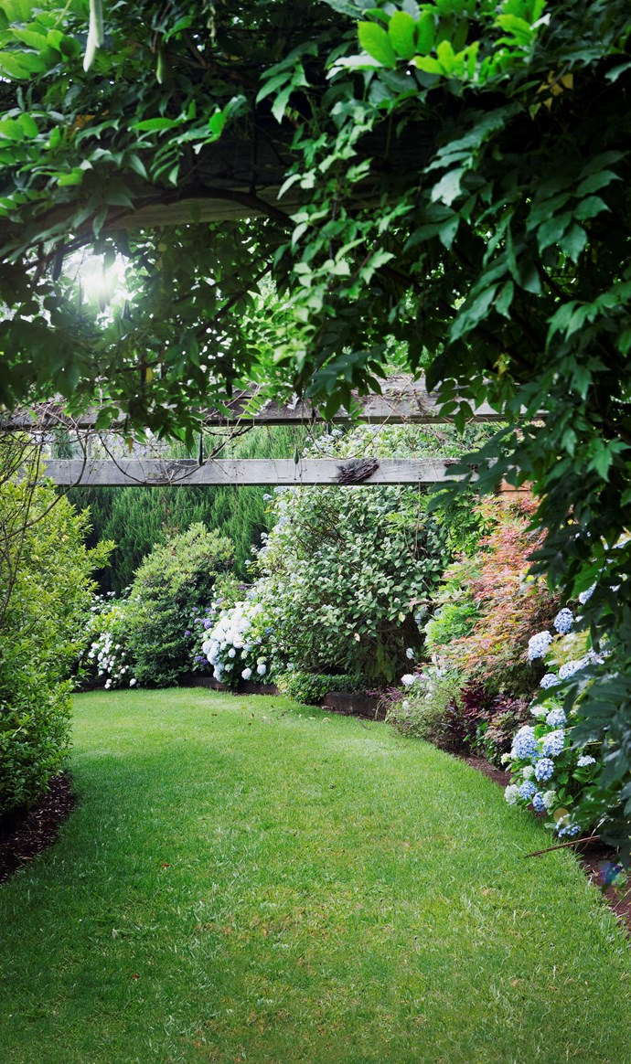 White Wisteria floribunda 'Alba' and Rosa 'Soaring Spirits' climb over one of the beams that gives the Arbour Walk its name. Along the walk are weeping Japanese maples (Acer palmatum dissectum 'Crimson Queen'), hydrangeas, irises, lilies and violets.