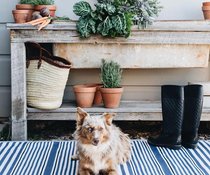 Indoor outdoor rugs are built to withstand everyday wear and tear.
