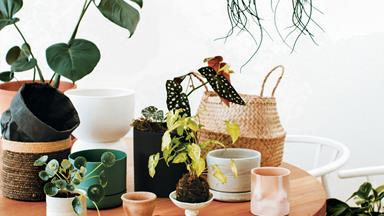 8 common indoor plant problems