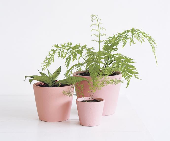 "Indoor plants in coloured pots means a double dose of colour for your home. Serax Stoneware flower pots, from NZ$17.90, from [Father Rabbit](https://fatherrabbit.com/|target=""_blank""