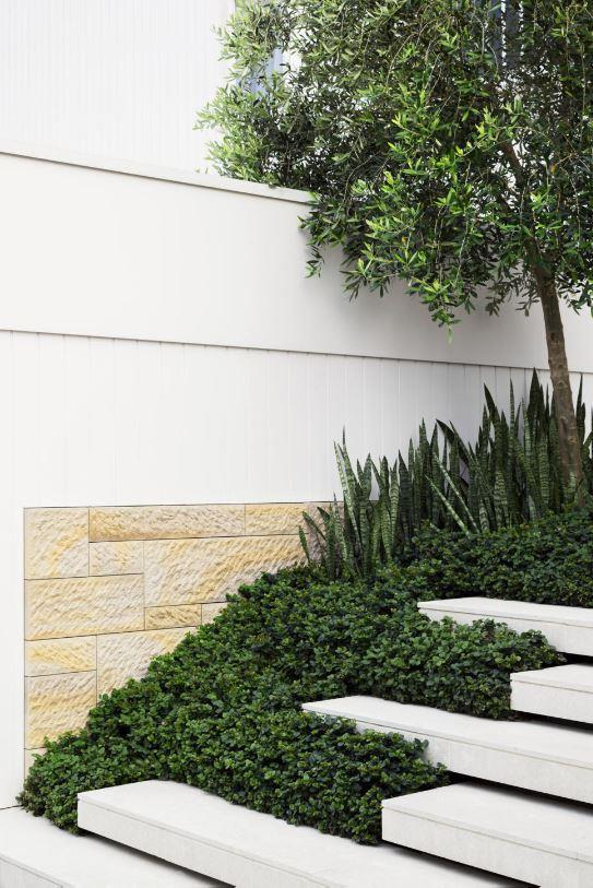The entry's floating steps are interspersed with *Carissa macrocarpa* 'Desert Star'. Behind is *Sansevieria trifasciata* and an olive tree. The cladding is sandstone, and tiles are briush-finished Cocullo limestone from Eco Outdoor.