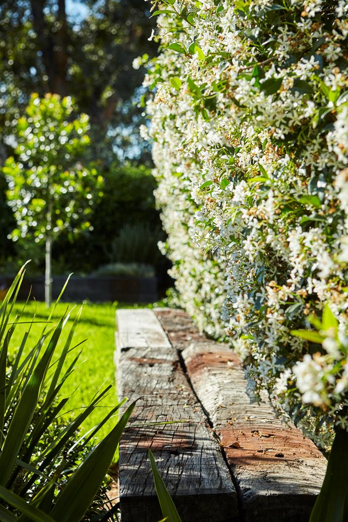 """[Star jasmine](https://www.homestolove.com.au/the-best-climbing-plants-and-how-to-grow-them-5423