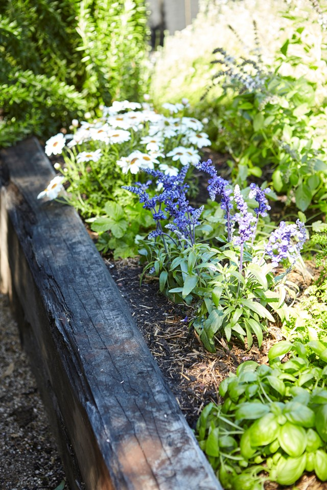 "Planted to attract bees and butterflies, daisies and salvias are a pretty - and useful - feature in this [urban garden](https://www.homestolove.com.au/an-urban-garden-with-a-lot-to-offer-6905|target=""_blank""). Recycled iron bark railway sleepers frame the garden bed. *Photo: Natalie Hunfalvay*"