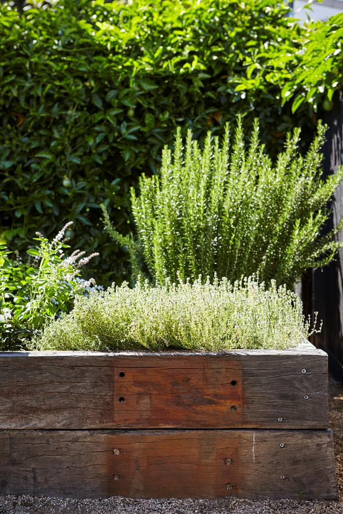 Rosemary and thyme thrive in their raised planter.