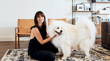 Real pets: Gus the smiling Samoyed