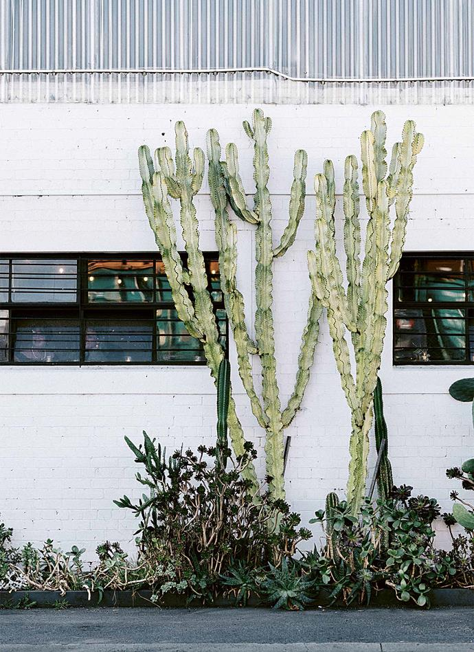 The cacti-lined exterior wall of Gather & Tailor. *Photography: Marnie Hawson*