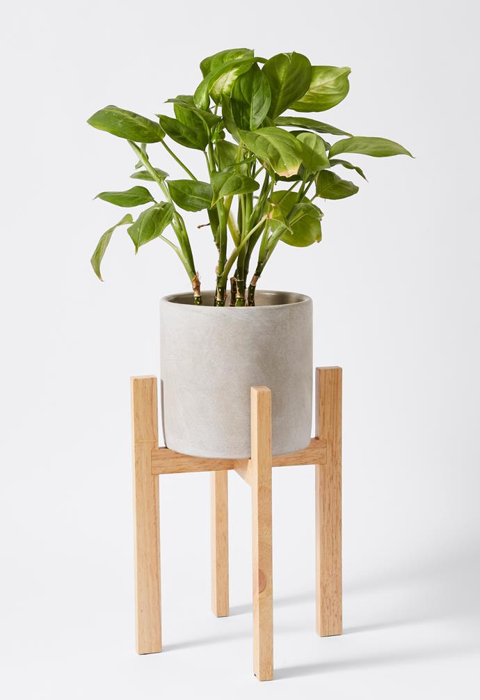 """Concrete pot with wooden stand, $15, [Target](https://www.target.com.au/ target=""""_blank"""" rel=""""nofollow"""")."""