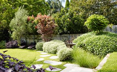 10 trees to plant in backyards big or small